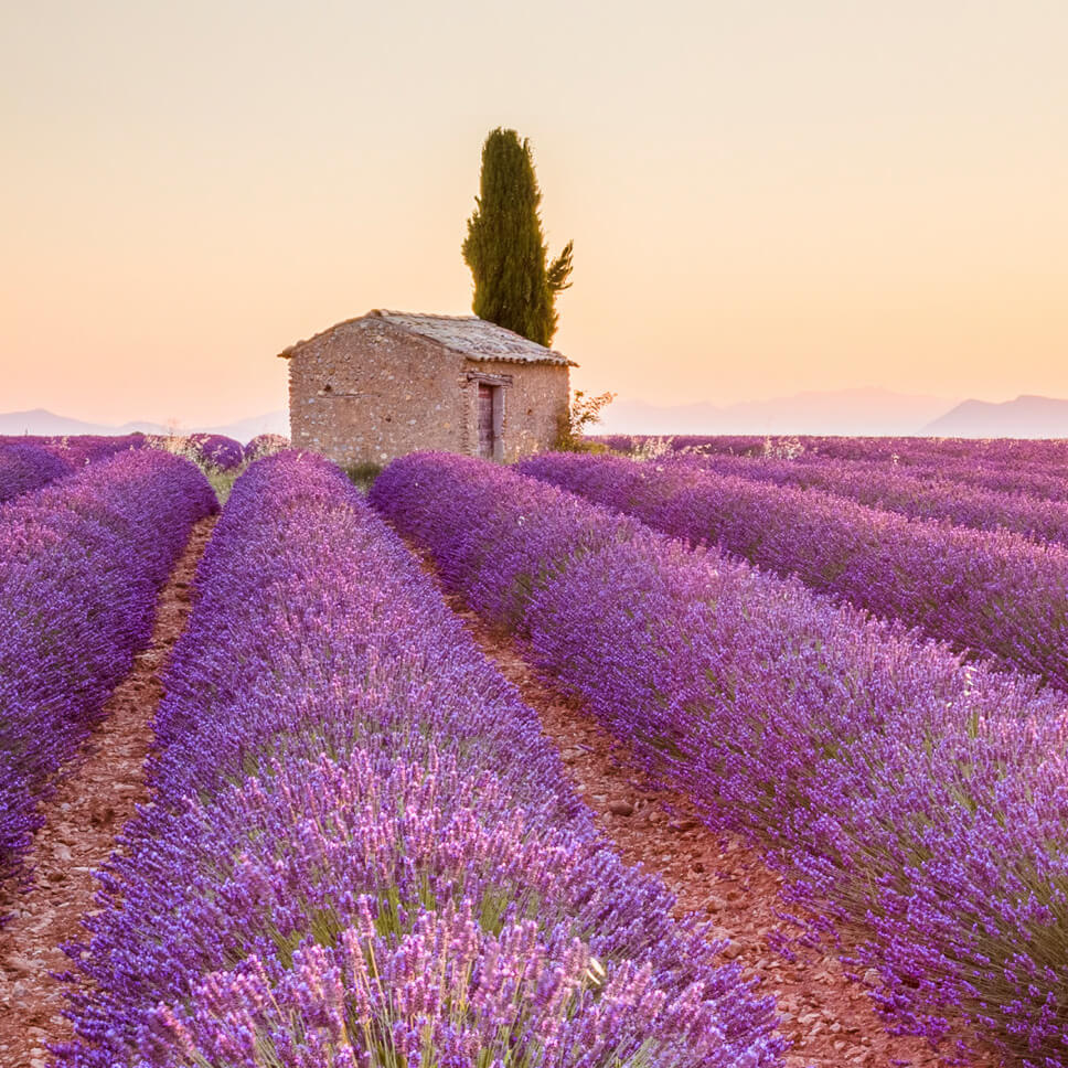 La Provence, flavour of an evening ...
